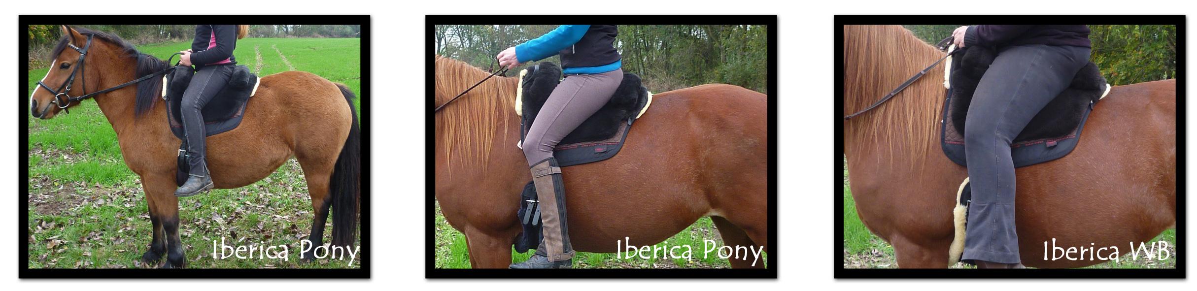 Größenvergleich Iberica Pony und Iberica Warmblut und Grandeur